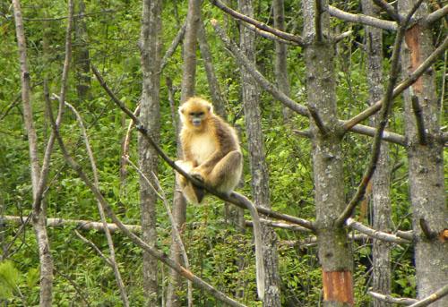人与自然和谐共存——神农架自然保护区
