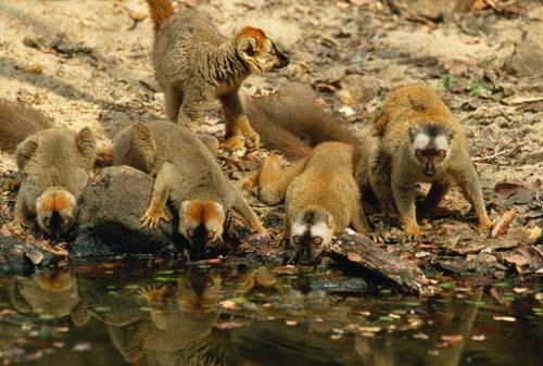 科学家解开马达加斯加动物来源之谜
