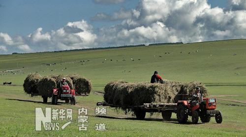 近期,内蒙古的呼伦贝尔,锡林郭勒等草原牧区开始大规模的打草工作和草
