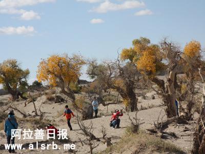 """游客们在""""怪树林""""景区拍照."""