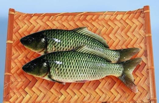 由于鲫鱼价格明显要比鲤鱼高,顾某觉得超市存在欺诈行为,随即就去找超市方理论,超市方称该鱼是新型鲫鱼,属于杂交品种,不影响食用。顾某表示自己是来买鲫鱼的,对这种新鱼种并不接受,更不敢食用,要求超市更换或者退货。   可超市方表示,商品一经售出,概不退换,顾某随即拨打12315电话进行了申诉。工商工作人员接诉后随即介入了调解,发现顾某购买的鲫鱼与普通鲫鱼确实两样,经仔细比对发现,顾某买的鱼更像鲤鱼,因为鱼唇相对丰厚且有短须,且整体显淡淡的朱红色,通过对比,可断定超市出售的不是鲫鱼,随即责令超市更换两条正宗