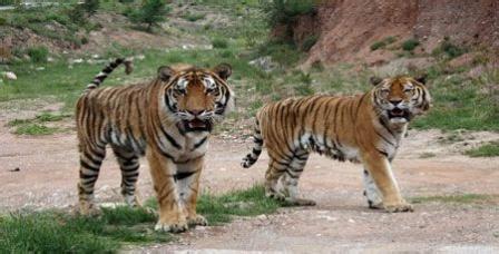 大青山野生动物园 - - 内蒙古新闻网 - 新闻中心