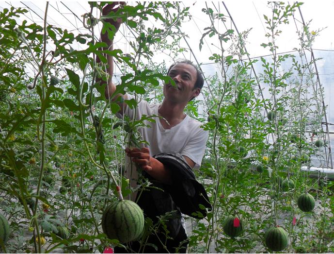 5月14日,阿荣旗那吉屯农场农业标准示范区副主任张国臣正在日光温室