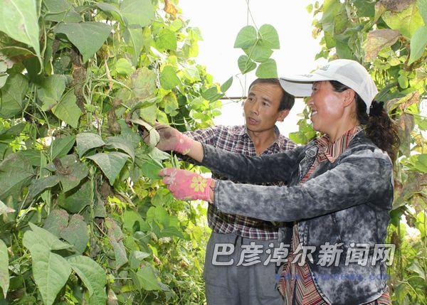 赵海霞:巴仁宝勒格村的种菜能手