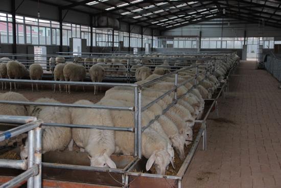 木头营子乡呼格吉乐养羊合作社生产厂房一角.