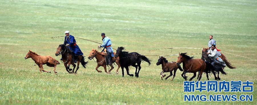 新闻中心 内蒙古新闻 盟市图片 正文    在内蒙古草原上,套马是蒙古族
