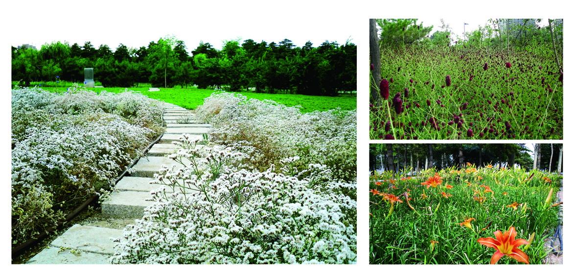 作为中国草原生态修复的引领者,蒙草抗旱公司在多年的科学研究和