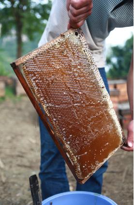 树新蜂,给中国人的高品质蜂蜜