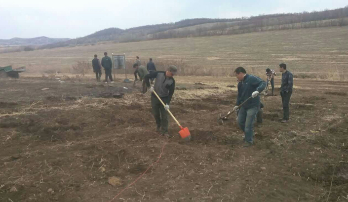 市国税局领导介绍,平欧杂交榛子树在兴安盟种植特别成功,在经过驻村