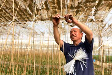 温室种植增收