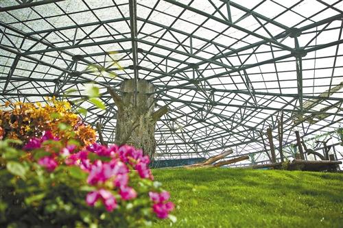 豪华舒适的鄂尔多斯野生动物园大熊猫馆一角
