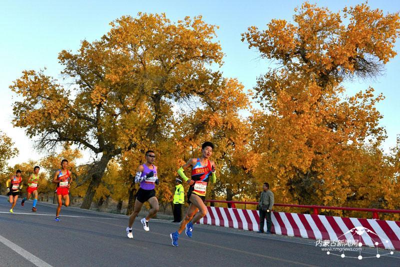 赛选手跑步穿越额济纳旗胡杨林二道桥景区.-2016中国 额济纳穿越