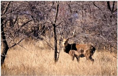 野生动物增加 - -内蒙古新闻网