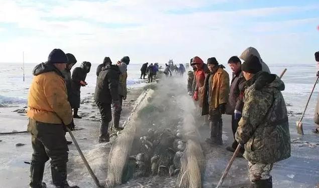 呼伦湖冬捕:趁着好天气,铆足劲、撒开网.jpg