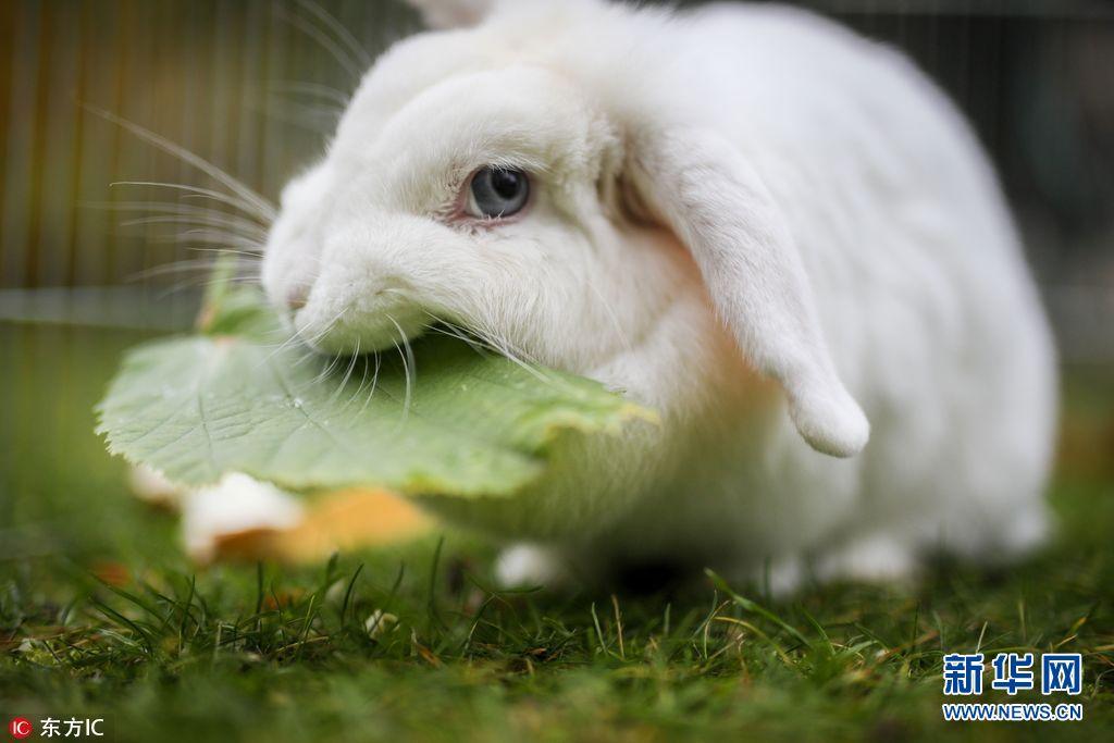 小编整理了国外那些乖巧惹人爱的小兔兔,让呆萌可爱的它们陪大家一起