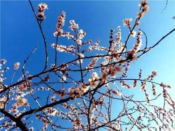 春天下雪图片早上好