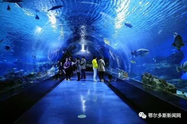鄂尔多斯海洋馆来了!预计10月与游客见面!.jpg