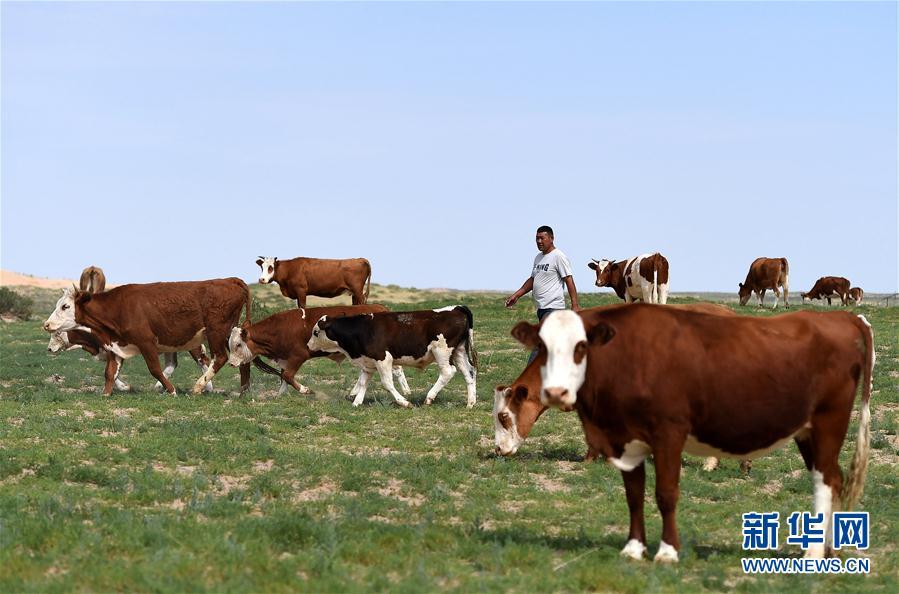内蒙古优质牛羊肉走上越来越多国人的餐桌