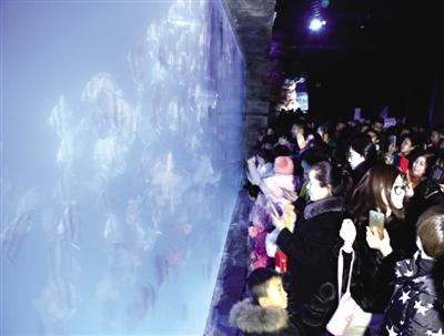 """幸运飞艇开奖记录app:""""美丽公约蓝丝带・与爱同行""""走进鄂尔多斯海洋馆暨保护海洋生物公益行动举行"""