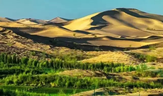 """游客来看""""满目黄沙"""",结果听到了沙漠里长出""""黄金""""的故事......"""
