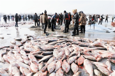 通辽:孟家段冬捕首网出鱼10万斤