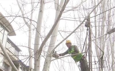 树木遮挡居民采光 园林部门及时修剪